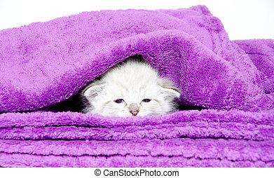 cute, cobertor, gatinho