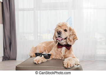 Cute cocker spaniel in party hat indoors