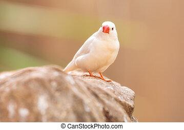 Small Cute bird, finch bird on the tree branch . .