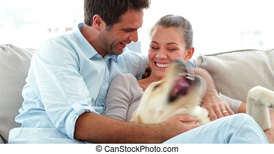 Cute couple petting their labrador dog on the couch at home...