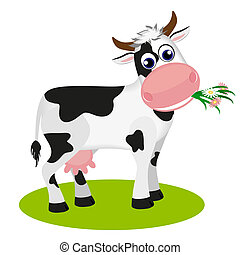 Cute cow eating daisy - Cute black and white cow eating...