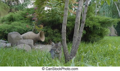 Cute curious baby cat checking out the environment playing...