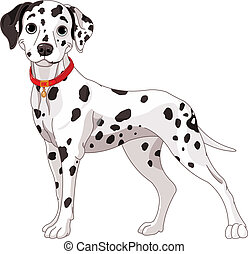 Illustration of a cute Dalmatian dog all attention
