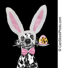 Cute dalmatian dog with rabbit ears and easter egg. Isolated on black