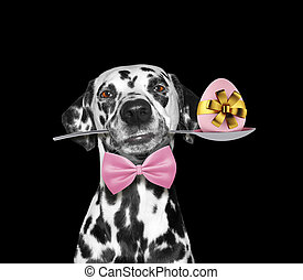 Cute dalmatian dog with spoon and easter egg. Isolated on black
