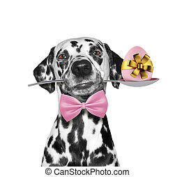 Cute dalmatian dog with spoon and easter egg. Isolated on white