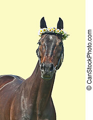 cute dark sportive mare isolated on yellow