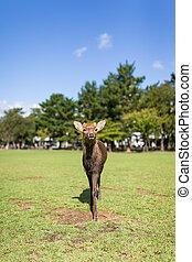 Cute Deer walking in a park