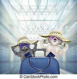 Cute dog and cat wait at the airport with blue suitcase