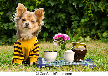 Cute dog at the picnic in summer garden