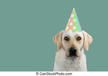 CUTE DOG CELEBRATING A BIRTHDAY PARTY, LOOKING AT CAMERA, WEARING A COLORED POLKA DOT HAT. ISOLATED AGAINST BLUE BACKGROUND. COPY SPACE.