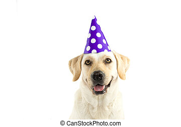 CUTE DOG CELEBRATING A BIRTHDAY PARTY, LOOKING AT CAMERA, WEARING A PURPLE POLKA DOT HAT. ISOLATED AGAINST WHITE BACKGROUND. COPY SPACE.