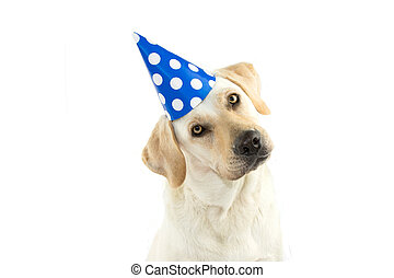 CUTE DOG CELEBRATING A BIRTHDAY PARTY, TINTING THE HEAD SIDE AND LOOKING AT CAMERA, WEARING A BLUE POLKA DOT HAT. ISOLATED AGAINST WHITE BACKGROUND. COPY SPACE.