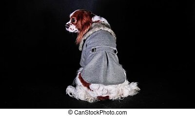 Cute dog coat winter hoodie clothes pet wear costume Puppy.