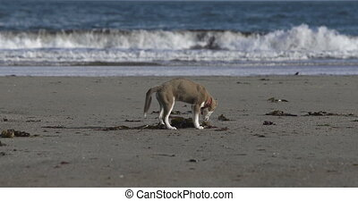 Cute dog digging in the sand on the beach