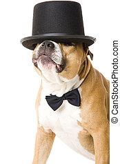 cute dog - Dog dressed for a wedding