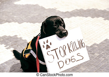 Cute dog holding a banner in his mouth saying Stop Killing ...
