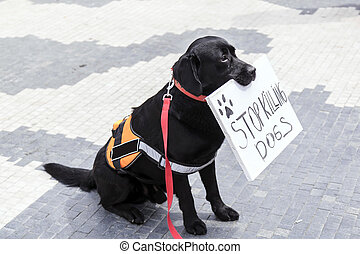 Cute dog holding a banner in his mouth saying Stop Killing Dogs