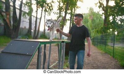 Cute dog husky running on overpass with host on playground...