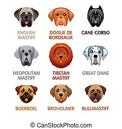 Cute dog icons, set III - Cute colorful mastiff dog head...