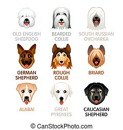 Cute dog icons, set IV - Cute colorful sheepdog and shepherd...