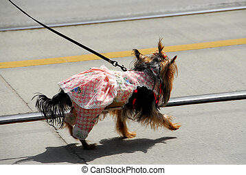 Cute dog in a dress