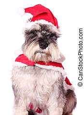 Cute dog in a Santa hat
