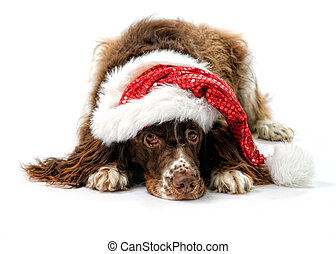 cute dog in a santa hat