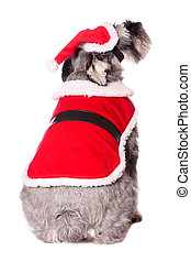Cute dog in a Santa outfit