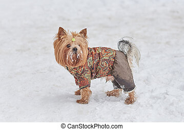 Cute dog in a suit in the snow