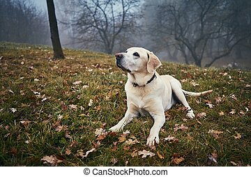 Cute dog in autumn nature