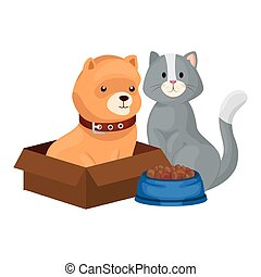 cute dog in box carton and cat with dish food
