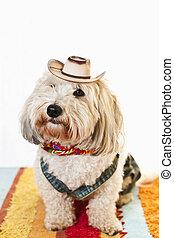 Cute dog in cowboy costume