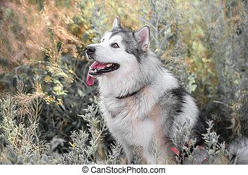 Cute dog in high grass