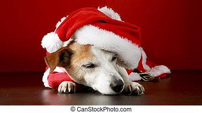 Cute dog in Santa costume lying on floor in studio