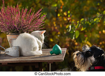 Cute dog looking at little white cat - Cat and dog love....