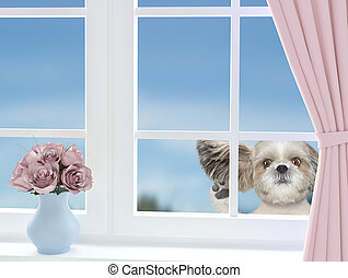Cute dog looking through the window
