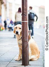 Cute dog on a city street