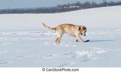 Cute dog on sparkling snow