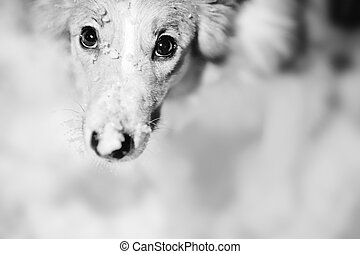 dog portrait black and white
