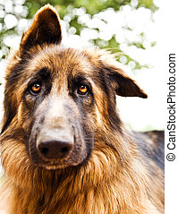 Cute dog portrait - Photo of beautiful sad dog, closeup...