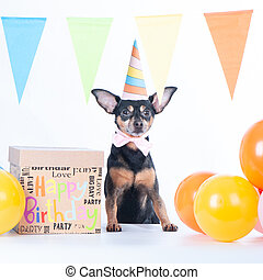 Cute Dog, puppy in party hat balloons and a box with a gift. Birthday concept, square
