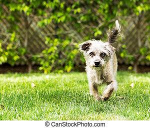 Cute Dog Running on Grass
