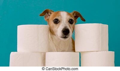 Cute dog sitting with rolls of toilet paper against blue wall