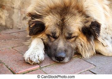 Cute dog sleeping on the sidewalk