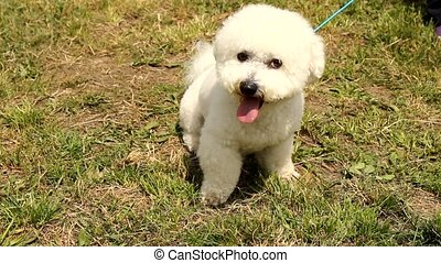 cute dog - small dogg on the grass