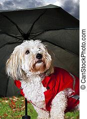 Cute dog under umbrella