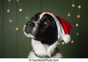 cute dog wearing santa s red hat. High quality and resolution beautiful photo concept