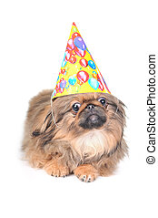 cute dog with birthday hat isolated on white