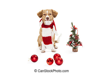 Cute dog with christmas ornament